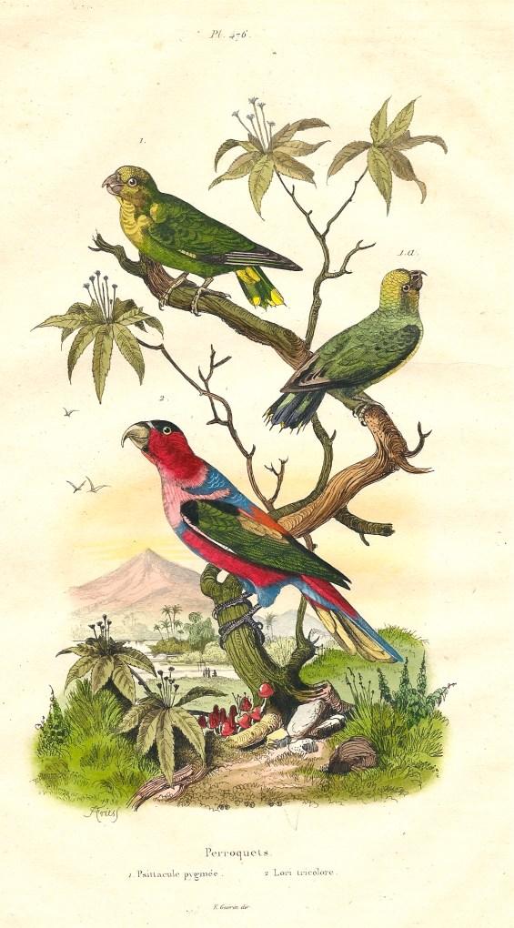 1838 Gravures_Adolf_Fries-2