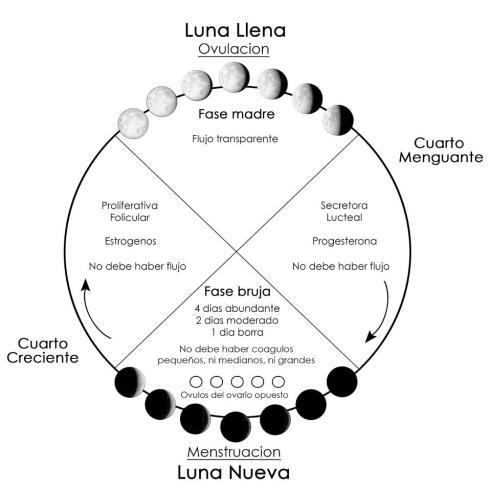 fases-de-la-luna-1