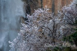 Arbol helado (cascada de Chorrogil)
