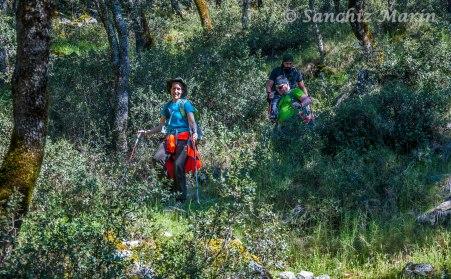 Atravesando un frondoso bosque de Encinas