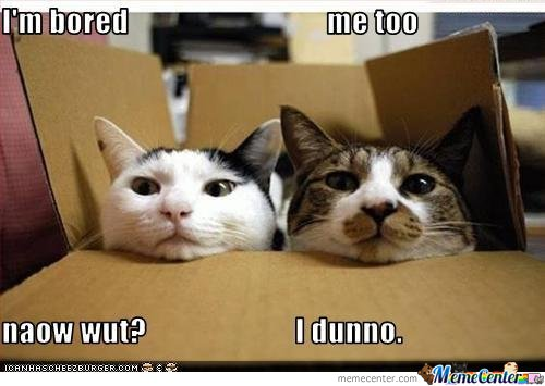Cats-is-bored_o_120706