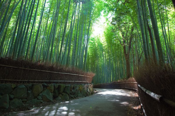 Majestic Bamboo Forest