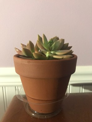 Plants: Succulents are easy to care for