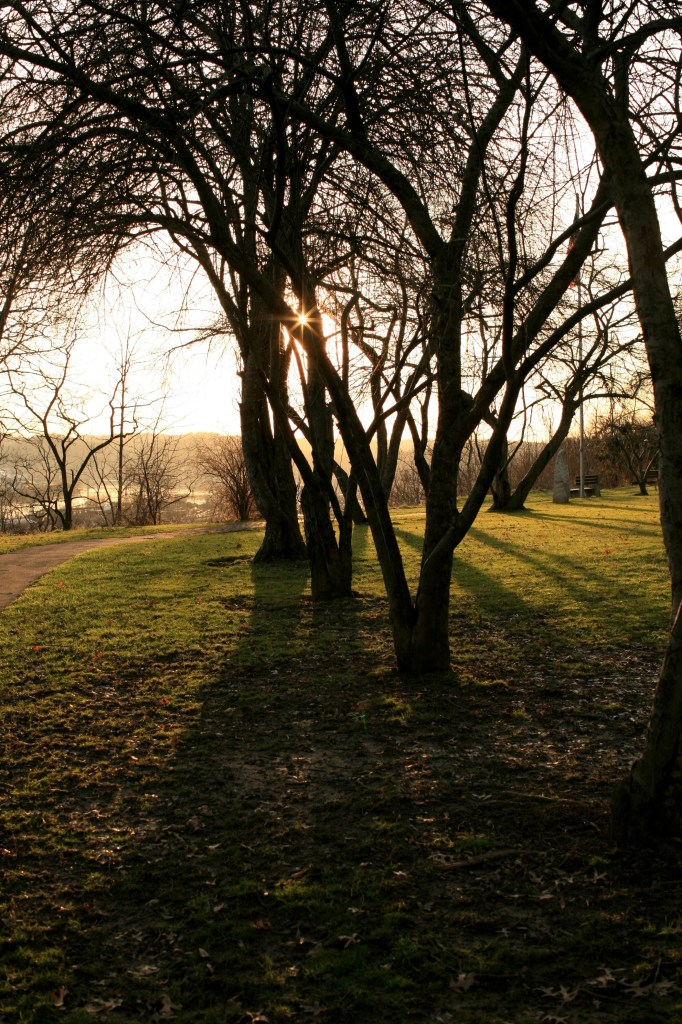 Before the trees sprout leaves, sunlight through the branches