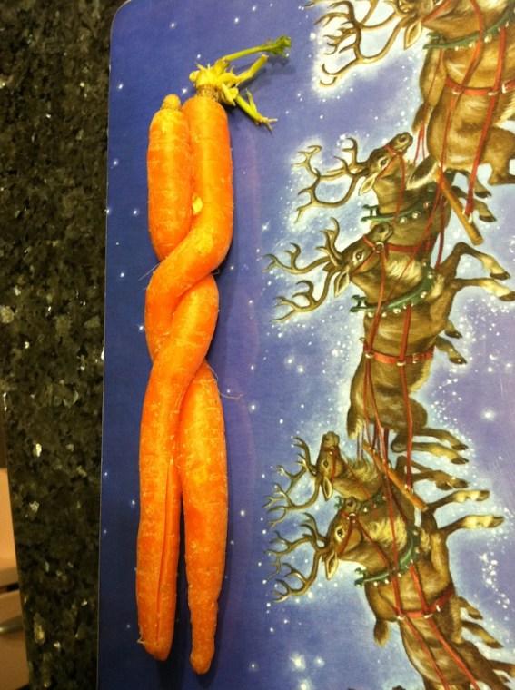 Carrot Duo