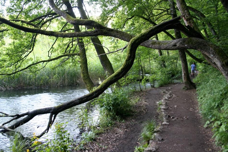 Tree in Plitvice