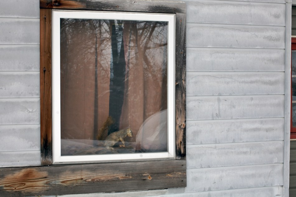 squirrel window