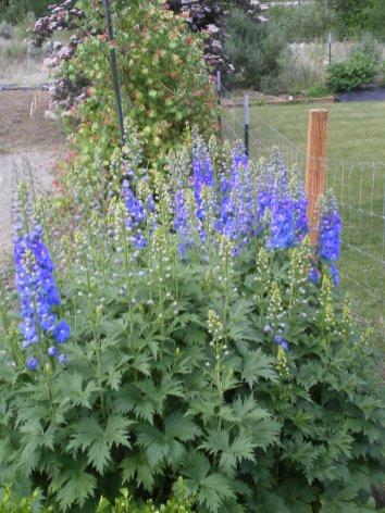 Flowers in Okanogan
