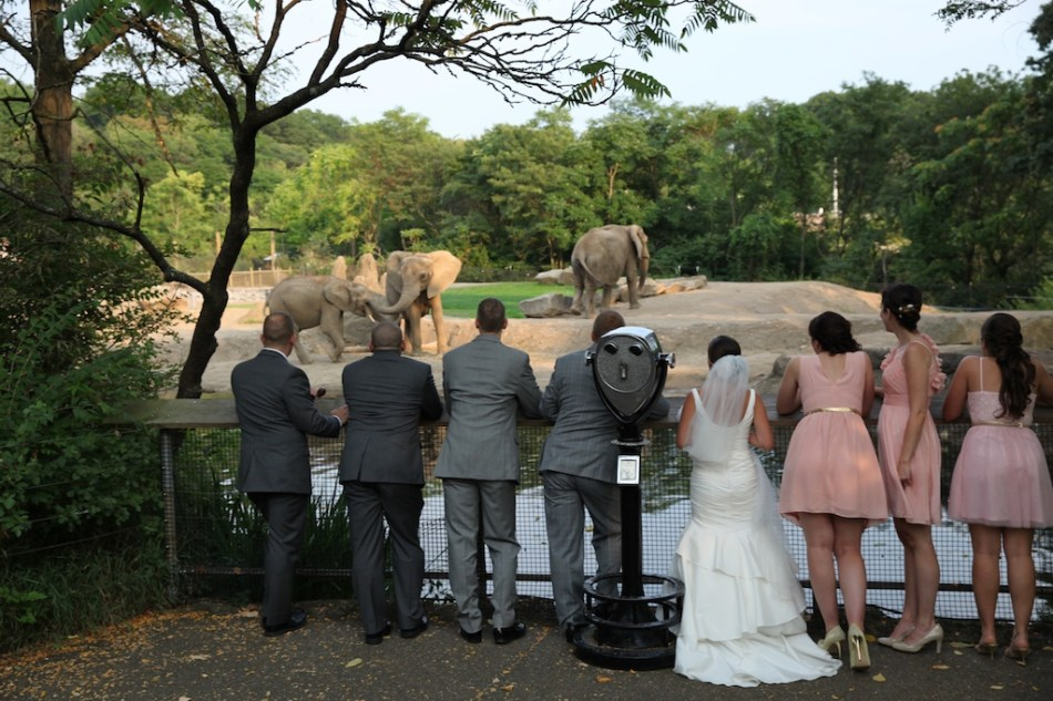 looking at the elephants