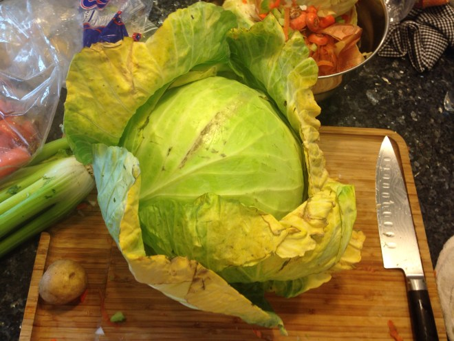Huge Cabbage