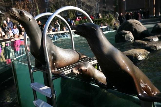 sea lions central park 3