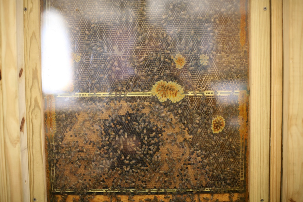 bees in the window