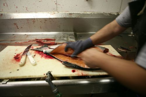 Swift Hands Gutting Fish