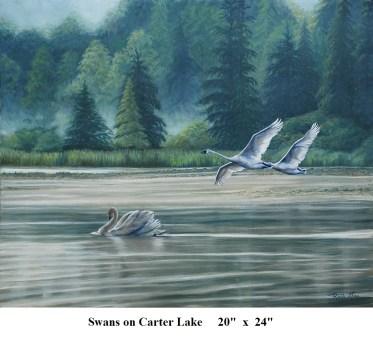 R Swans on Carter Lake