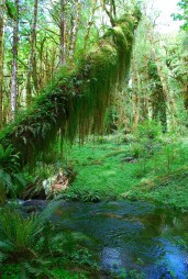 In the Olympic Rain Forest