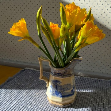 Indoor daffs