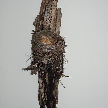 Desert Nest