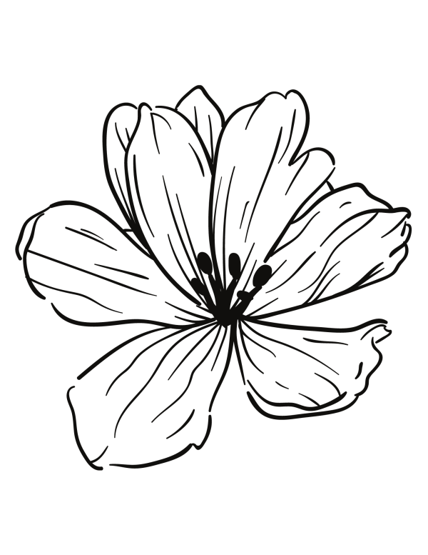 Floral colouring page