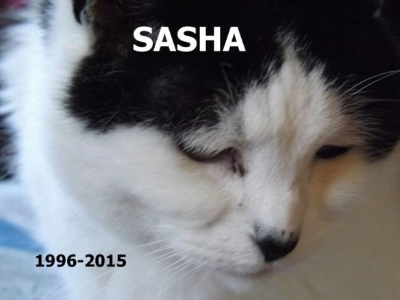 Sasha 1996-2015