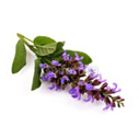 clary-sage for hair conditioner
