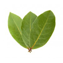 laurel-leaf- for best hair loss shampoo recipes