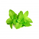 spearmint for hair conditioner