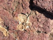 G Fossil Cove 5