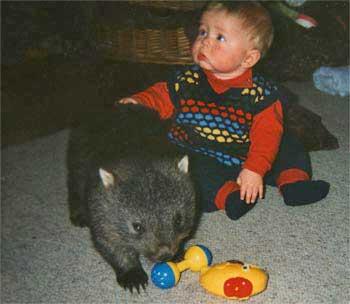 Rubin & Wombat