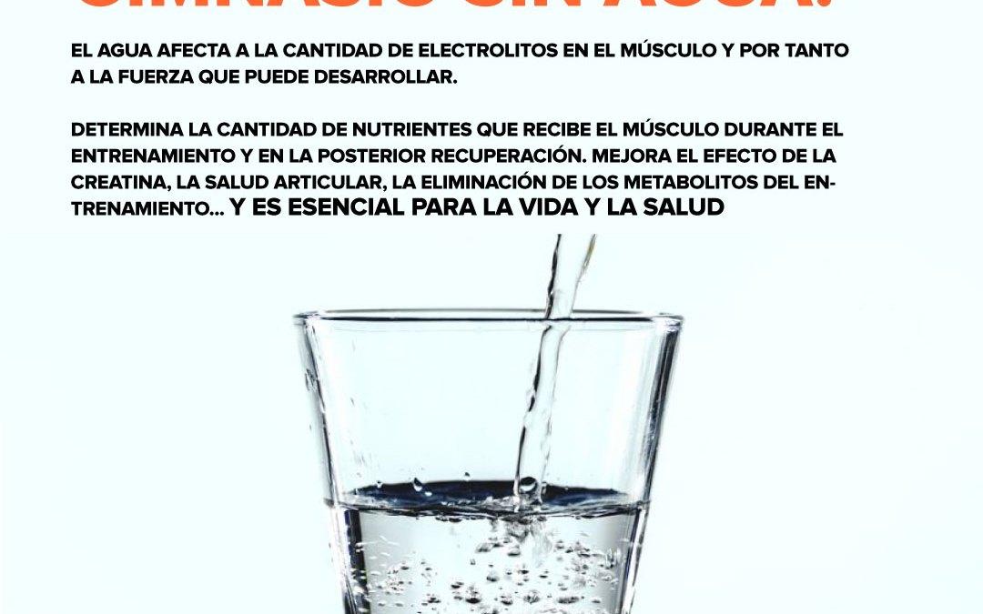 Hidratación y fitness: rendimiento e hipertrofia.