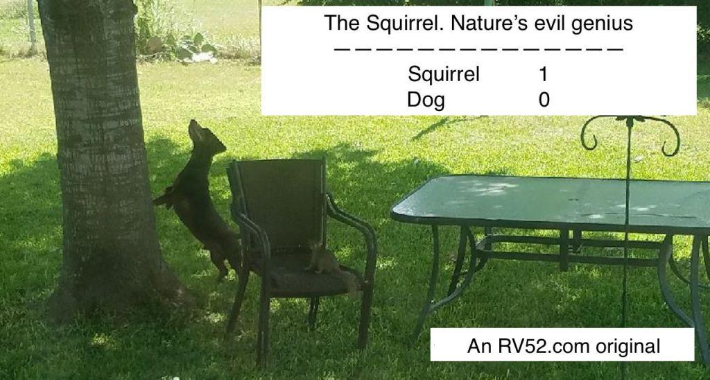squirrel beating dog meme
