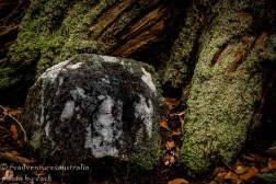 Rock breaking down on the forest floor.