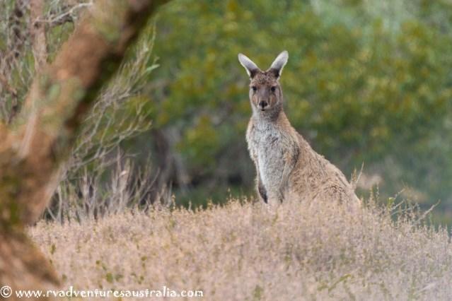 eyre-peninsular-south-australia-66