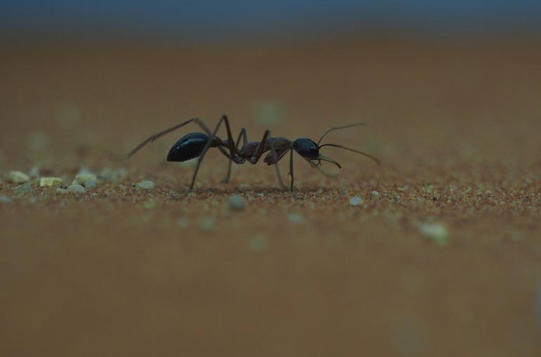7 Incredibly Effective Home Remedies To Rid Your RV of Ants