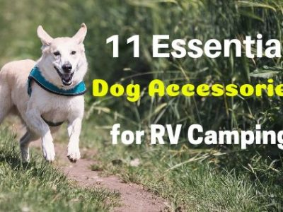 essential accessories for dogs when RV camping