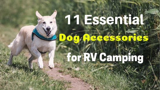 11 Essential Dog Accessories for RV Camping