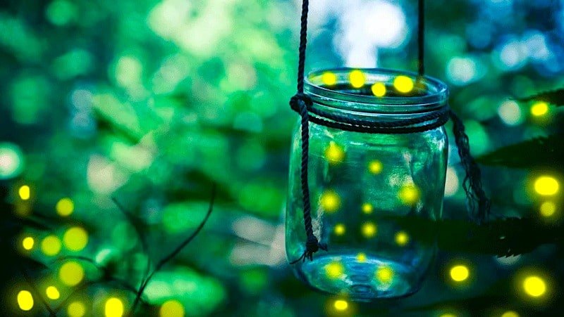 night time camping activity catch lightning bugs in jar