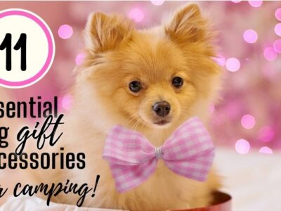 11 Essential Dog Gift Accessories for RV Camping