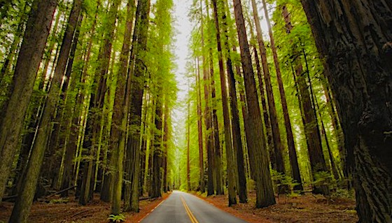 Avenue of the Giants Humboldt Redwoods State Park