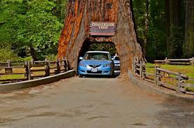 Drive Through Tree Humboldt Redwoods State Park