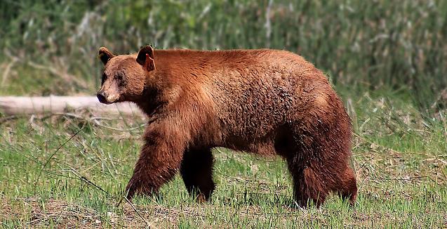 Yosemite Lakes RV Resort Black Bear