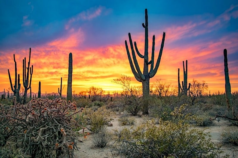saguaro national park sunset arizona