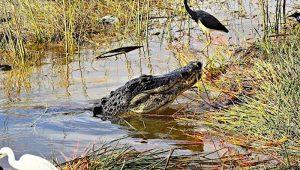 Everglades RV Camping: Boat Tours, Birds & Gators