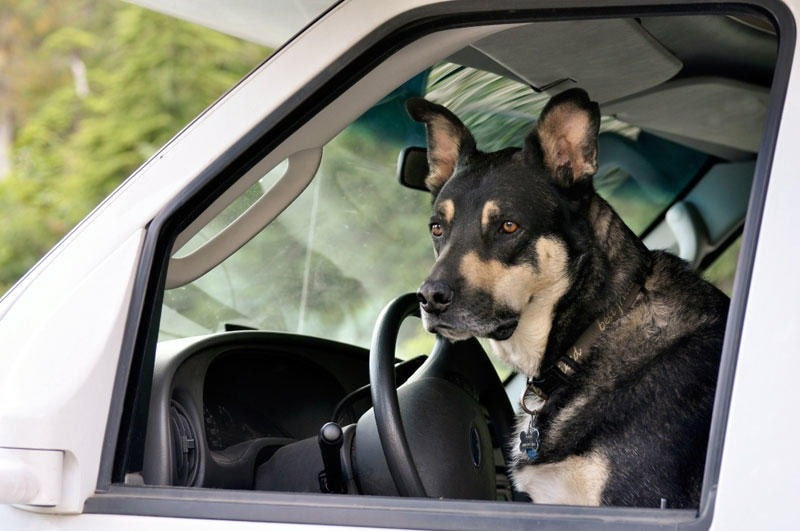 6 Best RVs for Traveling with Dogs