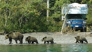 Can A Bear Get Into An RV? Bear Proof Your Camper!