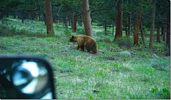 Do Car Alarms Scare Bears?