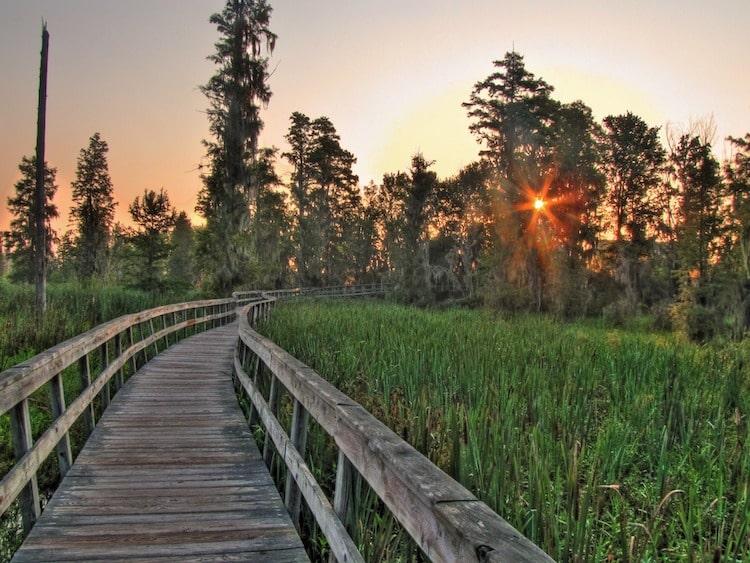 Phinizy Swamp Nature Park augusta