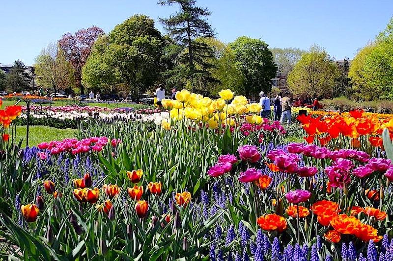 Washington Park albany ny