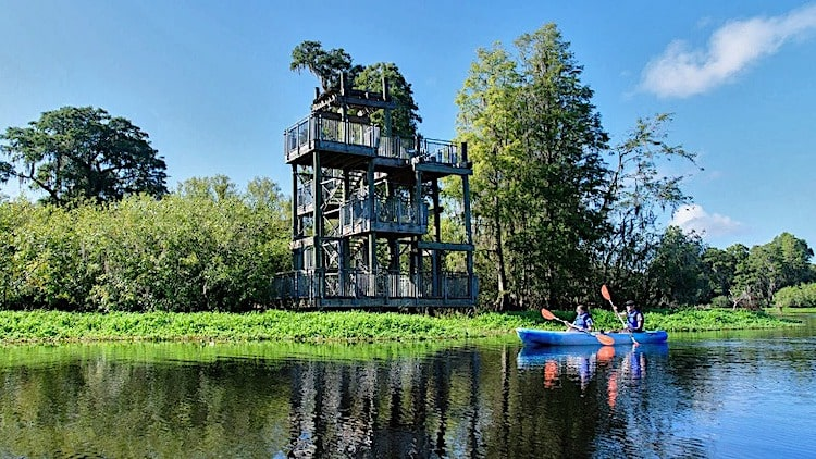 Lettuce Lake Regional Park Tampa Florida