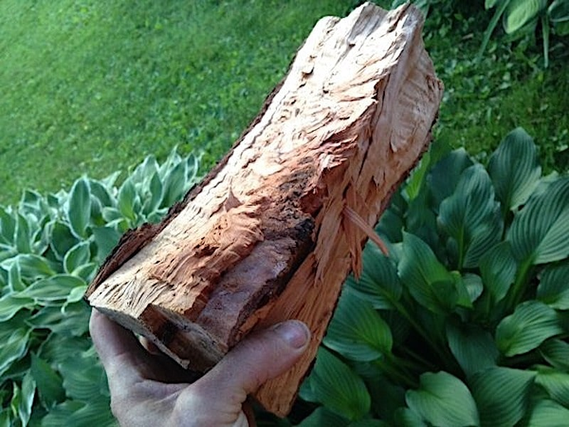 Pear firewood is one of the best smelling firewoods
