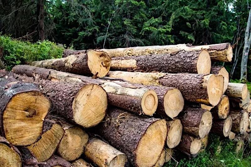pine firewood has an amazing aroma